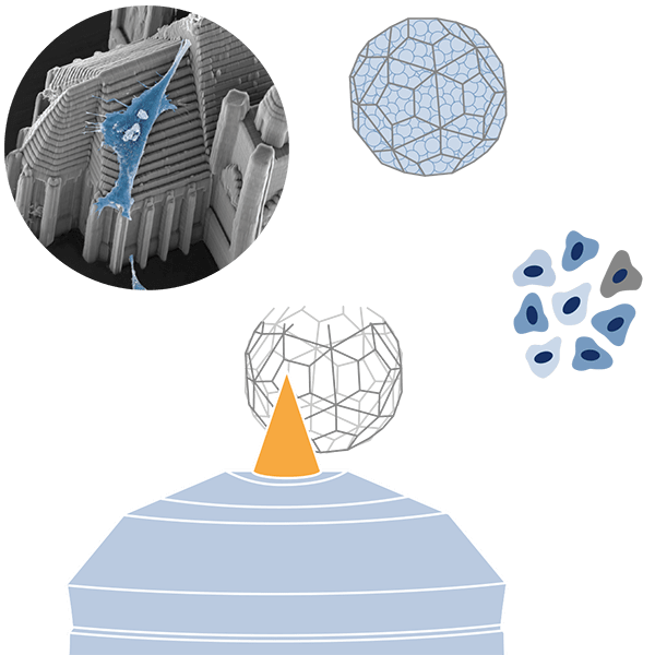 Infographic: Biocompatible structures